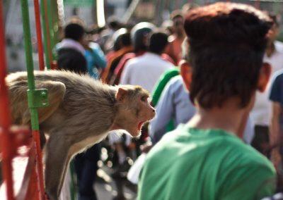 Monkey - Nick Bennett